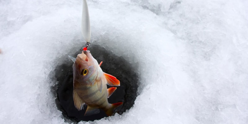 Ice Fishing Techniques