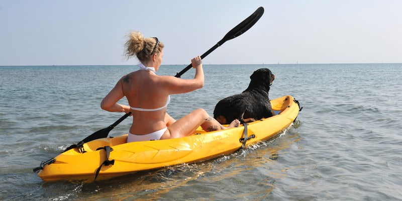 basics things for your dog in kayaking