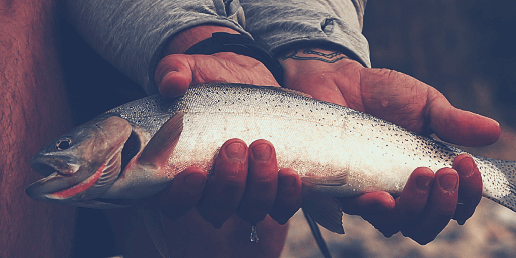 How to Debone Trout